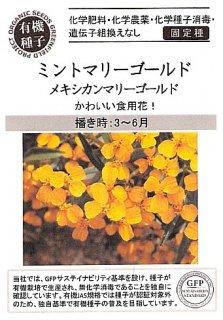 ミントマリーゴールド(メキシカンマリーゴールド)の種〔有機種子・固定種〕 ※無消毒