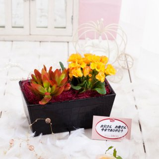 ミニ鉢植えセット(写真はイメージです。)