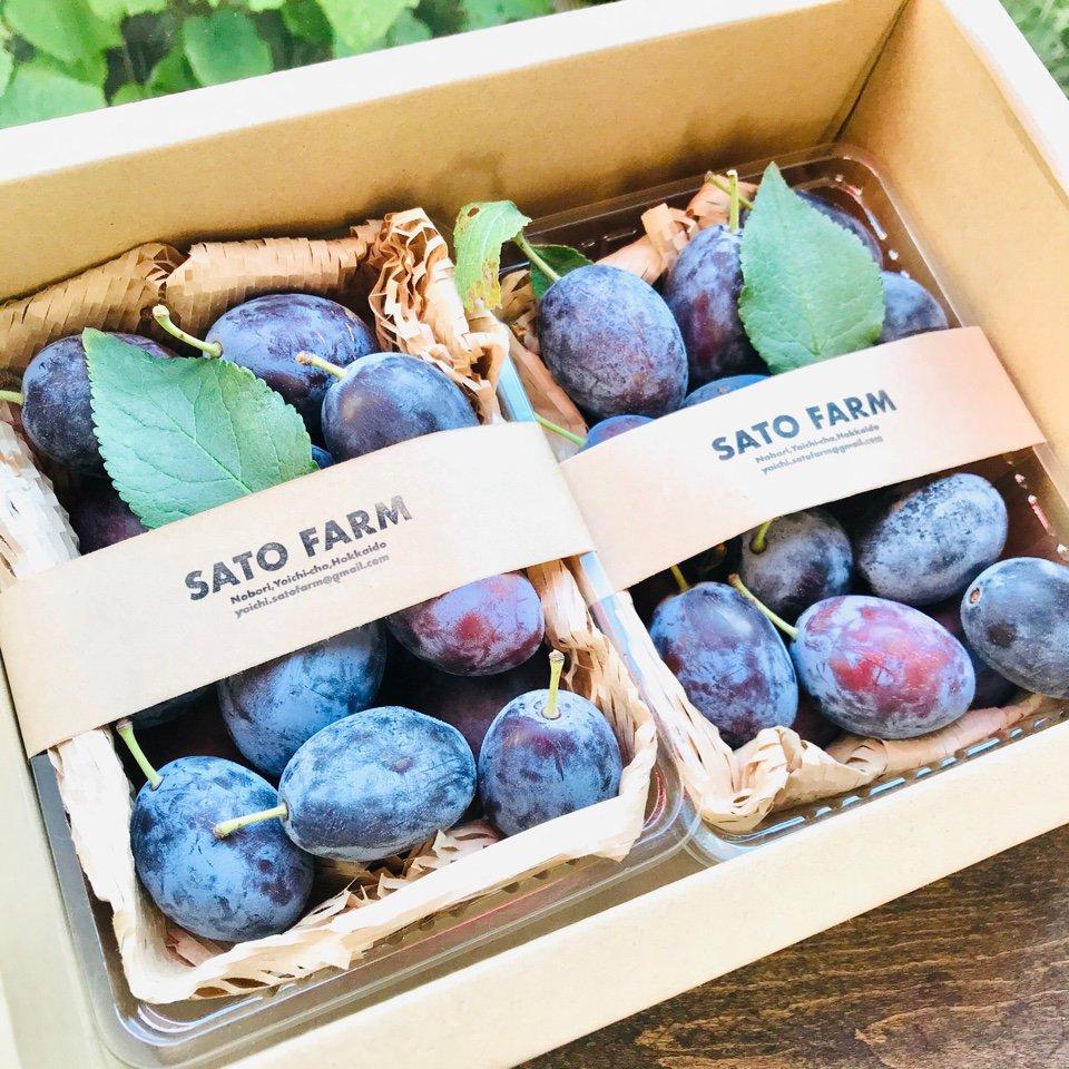 SATO FARM fruits