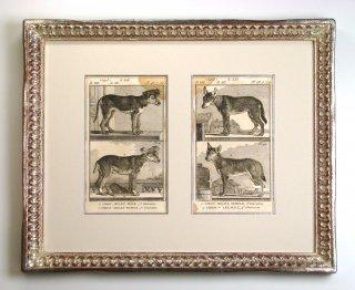 ビュフォン博物図版画 「犬の種 S」(GB-09)