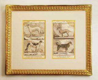 ビュフォン博物図版画 「犬の種 G」(GB-10)