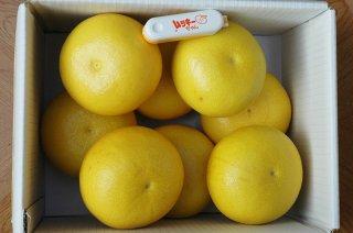 土佐文旦 家庭用5kg/2L〜4L(7〜11個)