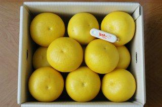 土佐文旦 家庭用10kg/2L〜4L(14〜22個)