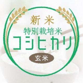 玄米コシヒカリ(特栽米)30kg<精米サービス>