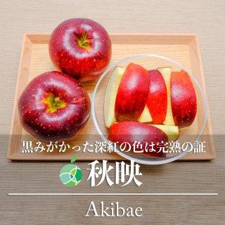 【送料無料】秋映(りんご)贈答用 約3kg(7〜10玉)長野県・高山村産