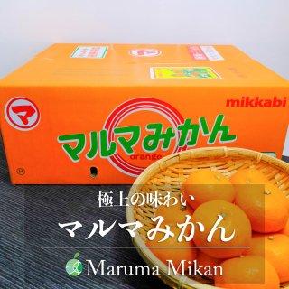 【送料無料】マルマみかん(みかん) 青秀 M 5kg 静岡県・三ヶ日産