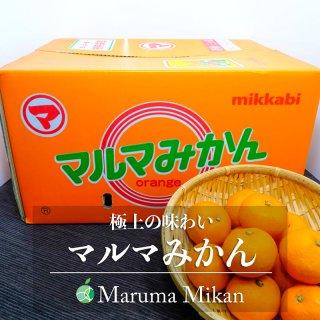 【送料無料】マルマみかん(みかん) 青秀 M 10kg 静岡県・三ヶ日産