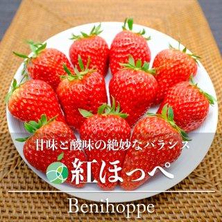 【送料無料】紅ほっぺ(いちご)2パック(12〜30粒)長野県・中野市産