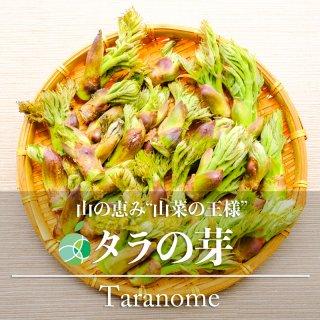 【送料無料】タラの芽・たらの芽(山菜)天然物 約300g 長野・新潟県産
