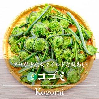 【送料無料】コゴミ・こごみ(山菜)天然物 約1kg 長野・新潟県産