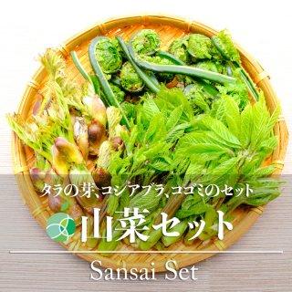 【送料無料】山菜セット(タラの芽・約300g、コシアブラ・約300g、コゴミ・約500g)天然物 約1.1kg 長野・新潟県産