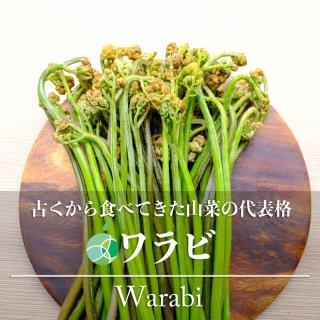 【送料無料】ワラビ・わらび(山菜)天然物 アク取り用の木炭付き 約300g 長野・新潟県産