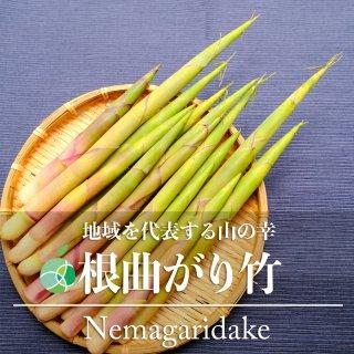 【送料無料】根曲がり竹・姫竹(山菜)天然物 約300g 長野・新潟県産