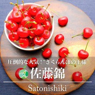 【送料無料】佐藤錦(さくらんぼ)2L 秀 ハウス栽培 約600g 長野県産