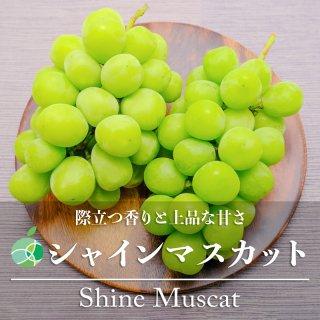 【送料無料】シャインマスカット(ぶどう)ハウス栽培 約2kg(4房)長野県産