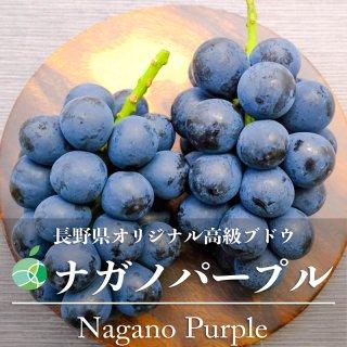 【送料無料】ナガノパープル(ぶどう)ハウス栽培 約1kg(2房)長野県産