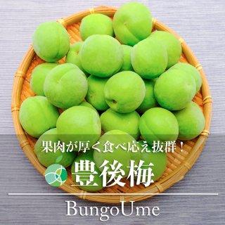 【送料無料】豊後梅(うめ)約1kg(特大)長野県産