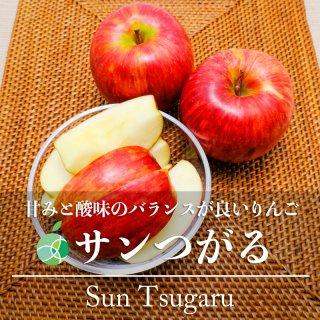 送料無料 サンつがる りんご 贈答用 約2kg 6〜10玉 長野県産