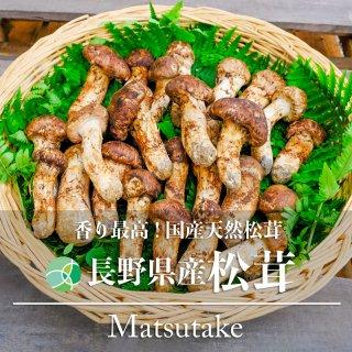 送料無料 国産松茸 きのこ つぼみ 天然物 約200g 長野県産