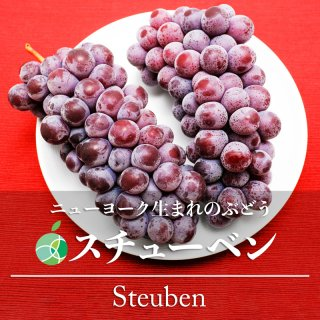 送料無料 スチューベン ぶどう 約1Kg 長野県産