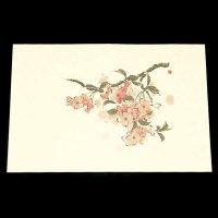 遊膳 NW-04 抗菌尺三まっと日本の四季 桜 【100枚入り】