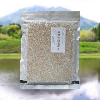 令和3年産ミルキークイーン8kg(2Kg x 4) 玄米 真空パック