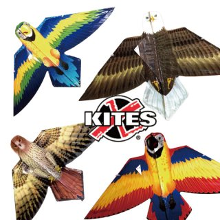 凧 カイト X-Kite ポリカイト Birds of a Feather バーズオブフェザー 凧揚げ 凧あげ お正月