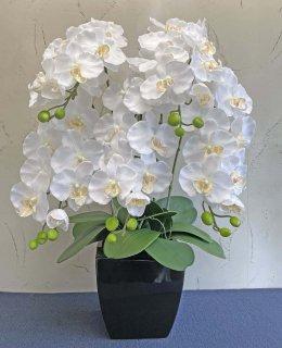 つぼみ付き胡蝶蘭5本立(高さ:約80� 陶器鉢)■色:ホワイト