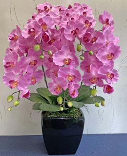 つぼみ付き胡蝶蘭5本立(高さ:約80� 陶器鉢)■色:ピンク