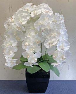 満開胡蝶蘭5本立(高さ:約80� 陶器鉢)■色:ホワイト