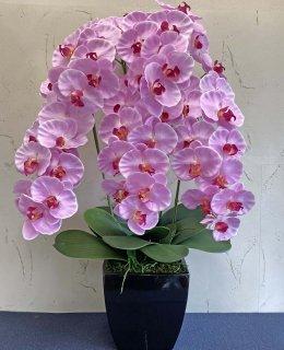 満開胡蝶蘭5本立(高さ:約80� 陶器鉢)■色:ピンク