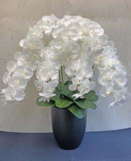 特大7本立胡蝶蘭(高さ:約90�陶器鉢)■色:ホワイト
