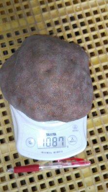 丹波篠山産 山の芋 特大サイズ【等級:秀】1kg (1玉)