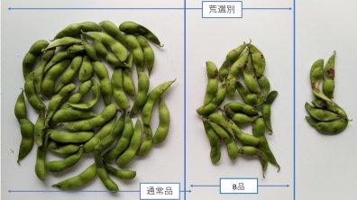 黒枝豆 B品 500g (注文条件あり)