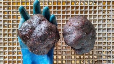 丹波篠山産 山の芋 10kg【等級:秀】大サイズ