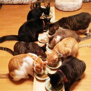 [ネコ支援]館の猫のごはん