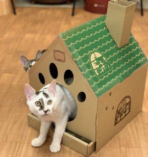 わちふぃーるど 猫のダヤン 爪とぎ付きキャットハウス 窓