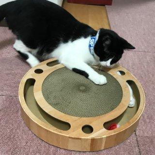 猫壱 バリバリパッドコロコロボール