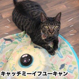 猫壱 キャッチ・ミー・イフ・ユー・キャン2 猫と音符