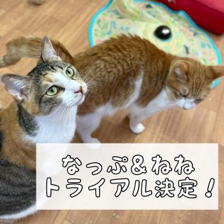 <img class='new_mark_img1' src='https://img.shop-pro.jp/img/new/icons1.gif' style='border:none;display:inline;margin:0px;padding:0px;width:auto;' />なっぷ&ねね★卒業決定!お祝いのおもたせ