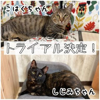 <img class='new_mark_img1' src='https://img.shop-pro.jp/img/new/icons1.gif' style='border:none;display:inline;margin:0px;padding:0px;width:auto;' />琥珀&しじみちゃん★卒業決定!お祝いのおもたせ