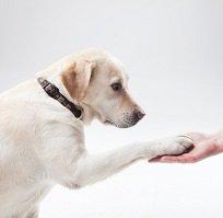 【動物取扱業認可】家庭犬訓練士初級ライセンス取得対策講座