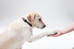 SAEペットe-カレッジ「環境省認定 家庭犬訓練ライセンス取得対策講座」