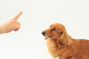 SAEペットe-カレッジ「SAE認定 犬の在宅トレーナーコース」