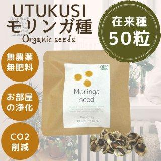 在来種モリンガの種子10g