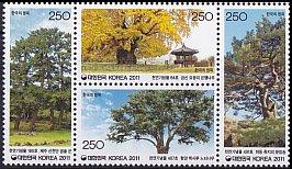 韓国・歴史のある樹・2011(4)
