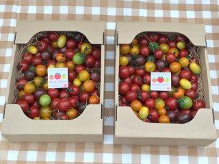 2箱 同一梱包でとってもお徳 ジュエリートマト(1箱1,5キロ前後約130粒〜180粒程度)×2箱
