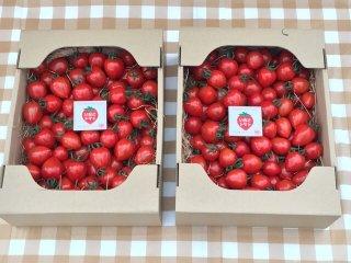 期間限定(6月下旬で栽培終了)同一梱包で送料がとってもお得 いちごトマト(トマトベリー)2箱(1箱1.5キロ 約120粒〜180粒)×2箱