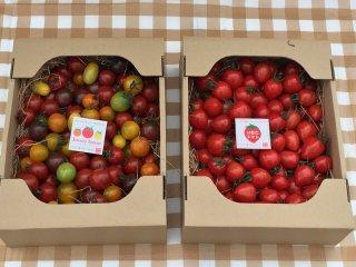 絶対おすすめ 同梱送料がお得 期間限定(6月下旬で栽培終了)ジュエリートマト&いちごトマト(トマトベリー)  (各トマト1,5キロ 120粒〜180粒程度)