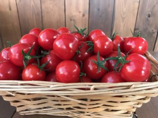 衝撃の一粒!さくらんぼトマト  (1箱 約1�入り)